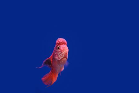 Beautiful beautiful color fish on a blue background