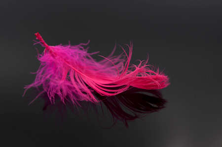 Abstract red feather on black background
