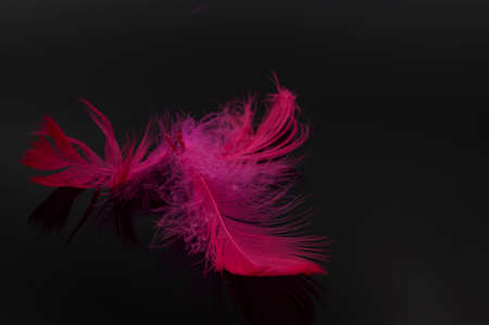 Abstract red feather on black background 版權商用圖片 - 155802020