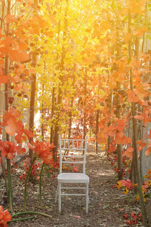 Holiday Party Colorful Autumn Background On Nature Background Archivio Fotografico
