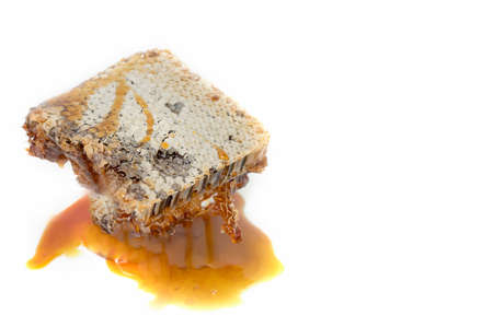 fresh honeycomb on white background with copy space