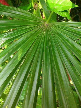 green nature: Green nature