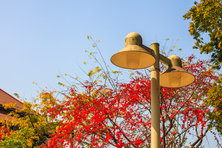 lamp post: a lamp post on a background of blue sky and tree