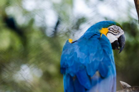 wingspan: macow parrot