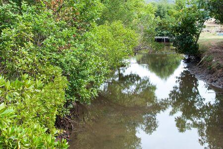 mangroves: Mangroves forest in chanthaburi thailand Stock Photo