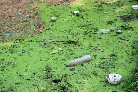 impure: A large amount of trash polluting our waters