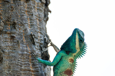 latent: Green chameleon on a tree