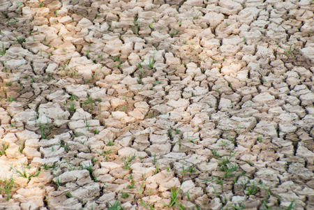 lack of water: Dry soil with dramatic cracks caused by the lack of water