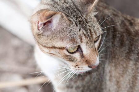 face close up: close up of cat face