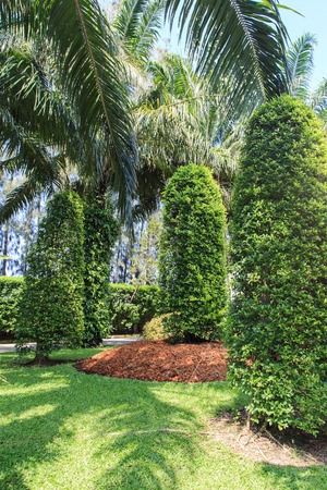 nicely: Nicely shaped tree in garden Stock Photo