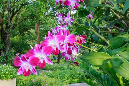 olant: Purple orchid flowers