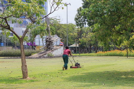 fertilisation: Woman gardener working with lawn mower