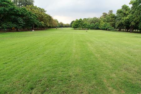 rot: Green grass background at Vachirabenjatas Park (Rot Fai Park). Stock Photo