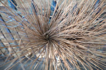 poppet: broom Stock Photo