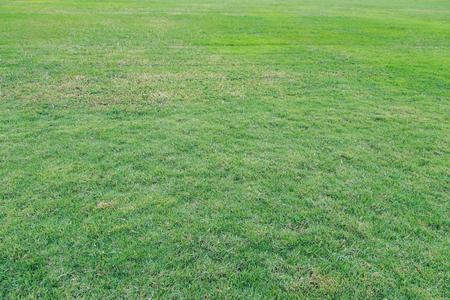 rot: Green grass background at Vachirabenjatas Park Rot Fai Park.