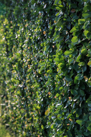 lea: Thick green garden hedge pattern.