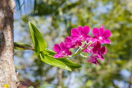 purple orchid: Beautiful purple orchid Stock Photo