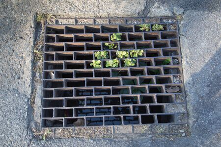 metal grate: Sewer grate Stock Photo