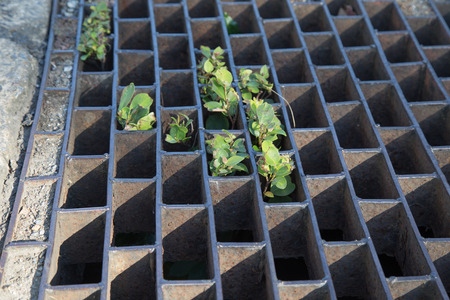 to grate: Sewer grate Stock Photo