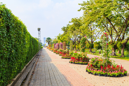 trimmed: Landscaping trimmed trees in public park, Bangkok Stock Photo