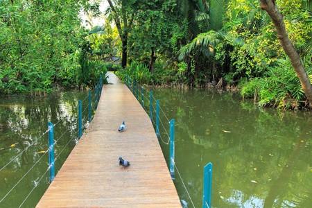 Walkway with wooden bridge through  forrest
