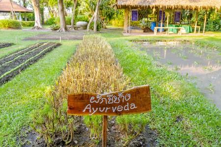 vegetable gardening: Vegetable Gardening
