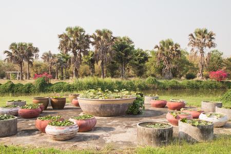 Small garden stone lotus pond