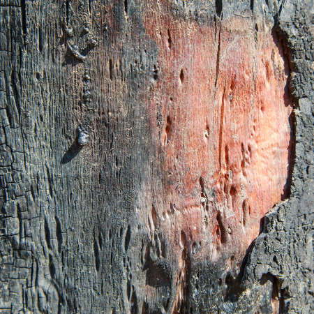 Burnt wood texture Standard-Bild