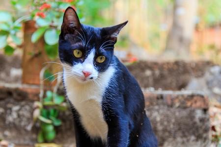 흰 반점이있는 검은 고양이 스톡 콘텐츠