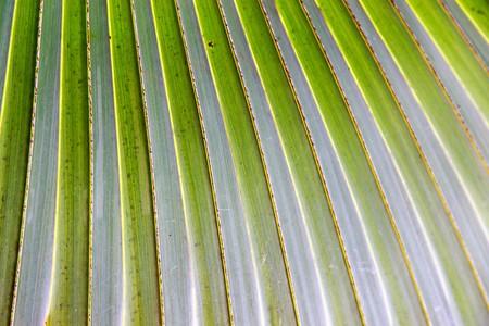 Beautiful Palm Leaf