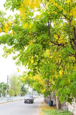 Thai Yellow flower or Cassia fistula (Dok Koon) Standard-Bild