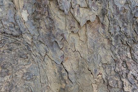 Rough wood texture background Standard-Bild