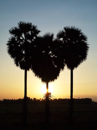 seemed: From the beginning it seemed as love heart Three palm like a love heart  Stock Photo