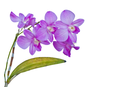 violet orchid flowers  photo