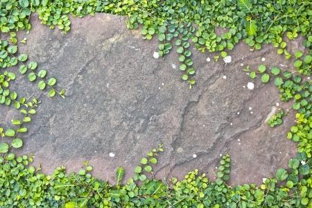 Plant stone board  photo