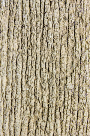 Old wood cracked texture background  photo