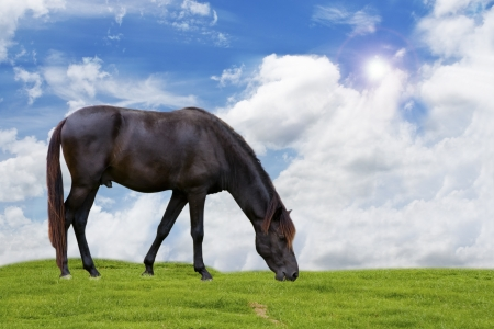 horse on sky background. photo