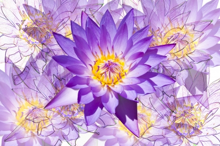 Lotus flower texture background  photo