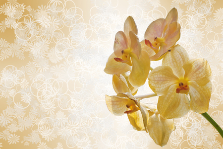 yellow orchid flowers  photo