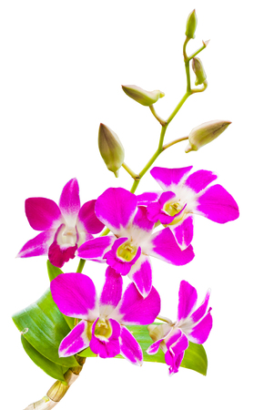 pink orchids flower  photo
