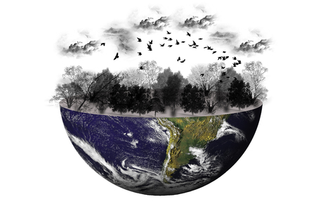utopia: Concept South America with trees and birds on silhouette