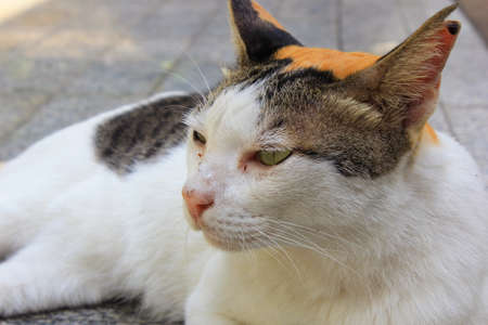 calico whiskers: calio cat lying on the floor