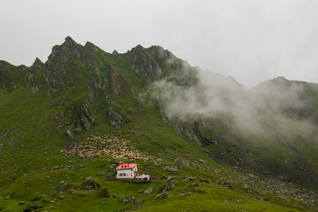 rumanian: MOUNTAIN VILLAGE ROAD WITH SHEEP ON THE SIDE Stock Photo