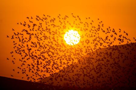 Bandada de aves que cubre la puesta de sol con montañas.