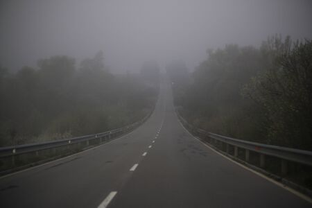 Foggy road with trees on the side in spring. Concept: Spring weather and dangerous roads