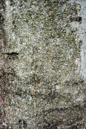 Background image tree bark Stock Photo - 13381487