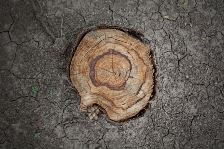 stump on cracked ground  photo