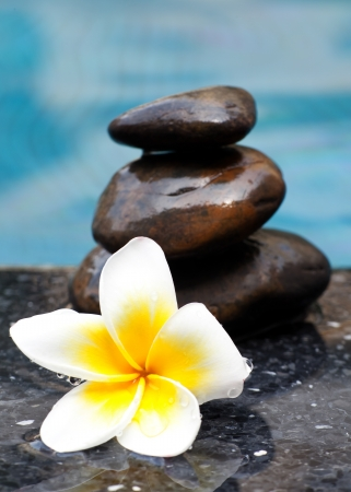 Frangipani flower and Zen style stone by the pool