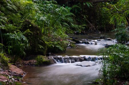 Stream in Rainforest Chaingmai , Thailand