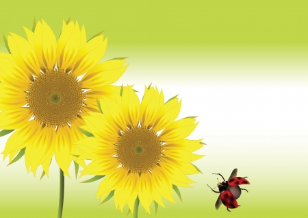 beautiful sunflower with ladybird Vector